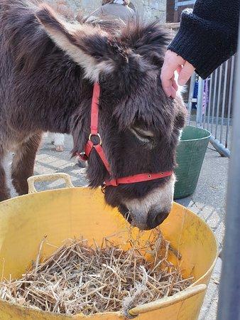 Loved the donkeys!