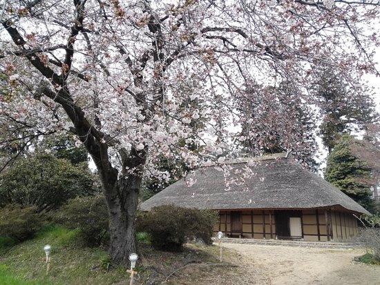 มาเอะบาชิ , ญี่ปุ่น: 七分咲きの桜と阿久沢家住宅