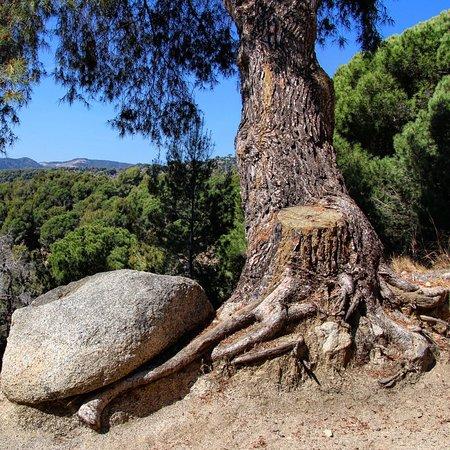 Teia, Spagna: Los bosques de Teià ofrecen una de las zonas más tupidas y bonitas de la Serralada Litoral con geniales vistas a toda la costa de Barcelona.