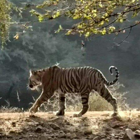 Ranthambore Tiger Safari