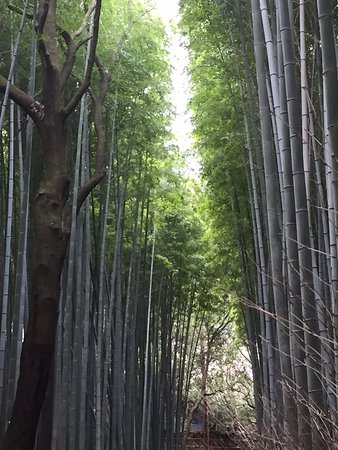 Bamboo forest and town