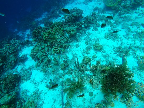 Double Dip Snorkel Trip: Snorkeling at Klein Bonaire- between the drop off & the shallows