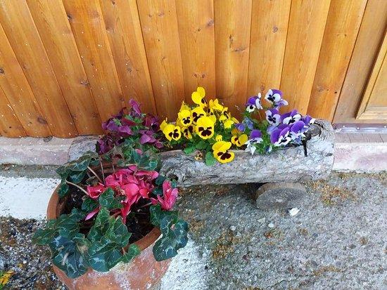 To Potami: Η ταβέρνα μας,με τα λουλούδια της..
