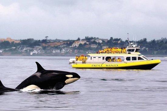 Avvistamento delle balene a Victoria