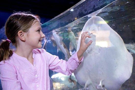 SEA LIFE Michigan Aquarium Admission...