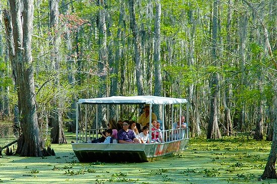 New Orleans Swamp and Bayou Boat Tour...