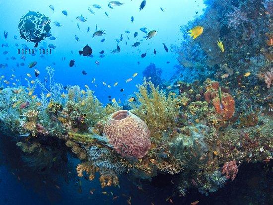 Ocean Tree Bali