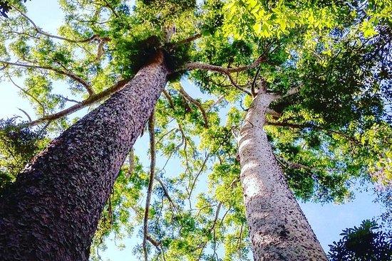 ケアンズからの熱帯雨林と滝の日帰り旅行(クレーター湖、ミラ滝、ジリー滝を含む)