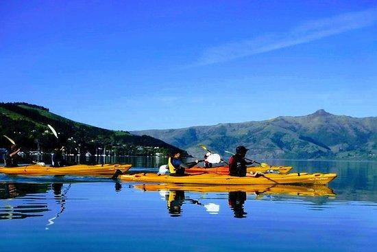 Akaroa-Küstenausflug: Tierwelt und...