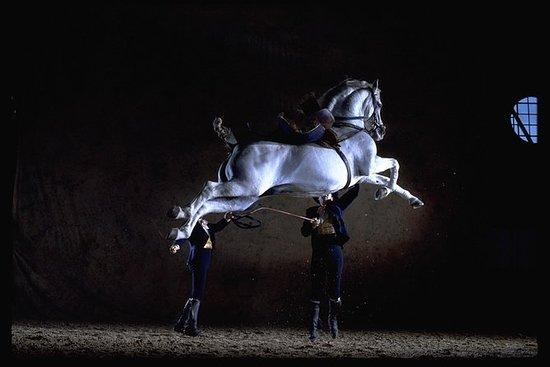 Danseopvisning med andalusiske heste