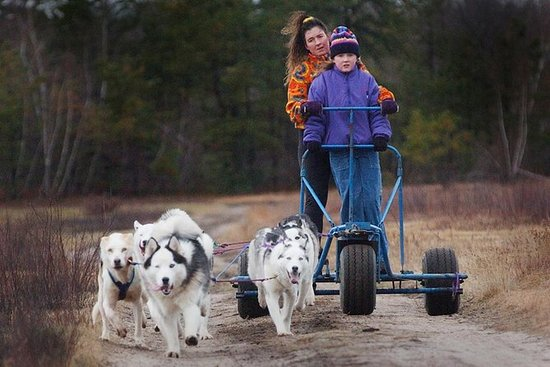 Dogsledding Adventure On Wheels