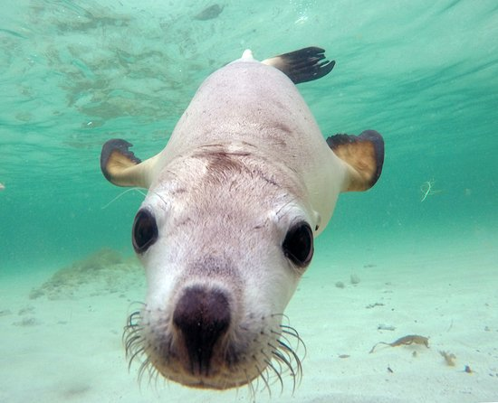 Jurien Bay, Австралия: Sea Lion Puppy
