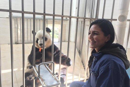 Tour dei panda a Dujiangyan e Wolong