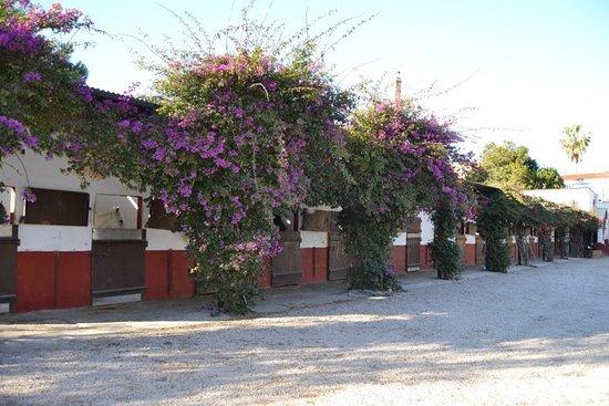 Catarroja, Испания: getlstd_property_photo