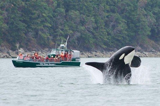 Tour di osservazione delle balene da