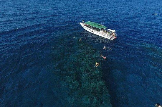 半夜浮潜冒险到拉奈岛和旋转海豚搜索