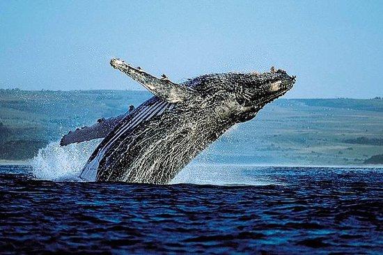 Samana Bus Tour d'observation des baleines : Samana Bus Whale-Watching Tour