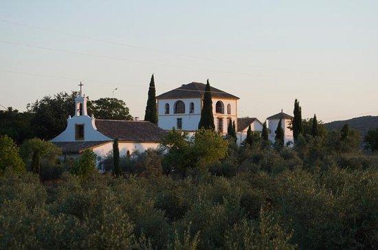 Tour y degustación de aceite de oliva al mediodía de Córdoba: Cordoba Midday Olive Oil Tour and Tasting