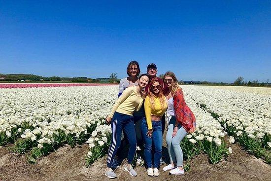 Lille gruppe Tulip og Spring Flower...