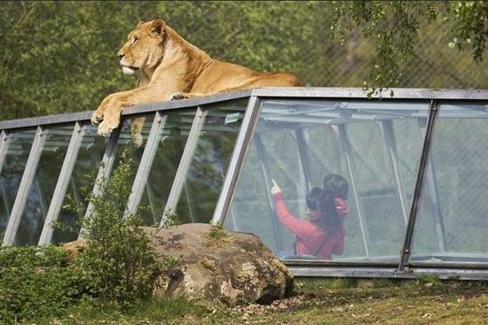 Entrada rápida a Thoiry Zoo Safari