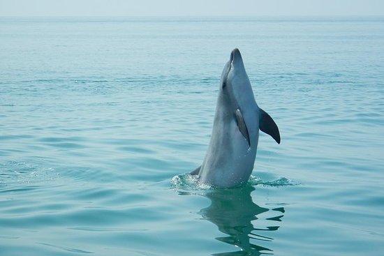 Observation des dauphins