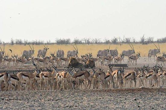 6日間のナミビア砂漠とエトーシャ国立公園
