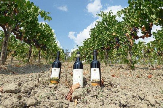 Maxi Wine Tour San Gimignano ...