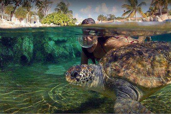 大开曼岛的西区活动和旅游