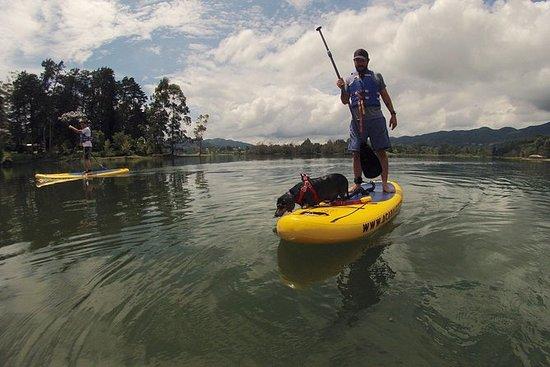 Private Stand Up Paddle Lesson i La Fe for 1 til 3 personer