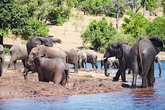 Chobe Full Day Trip