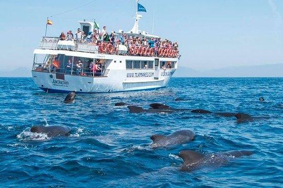 Tour de ballenas y delfines.