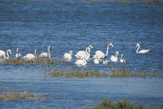 Observación de aves en la ría de...