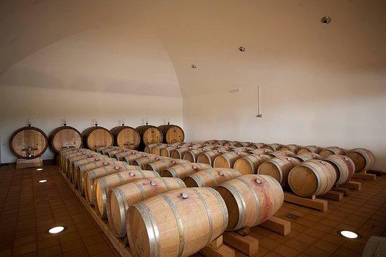 酒莊參觀,葡萄酒和油品嚐