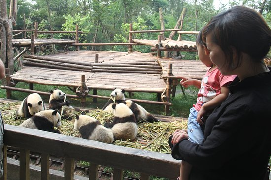 Chengdu One Day Tours