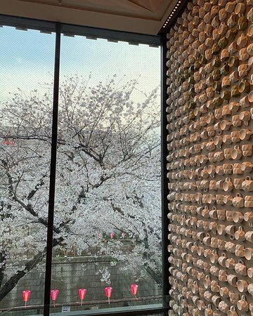Glimpse of cherry blossoms in the madness of Starbucks