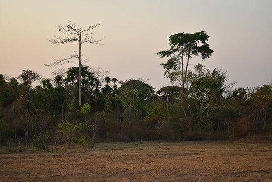 Lowland savanna, bush, and forest