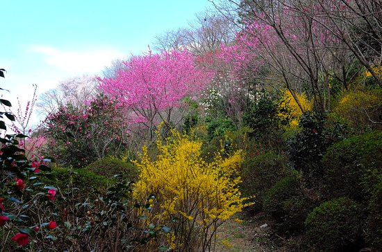 Tochigi Botanical Gardens Ogaki Hanayama