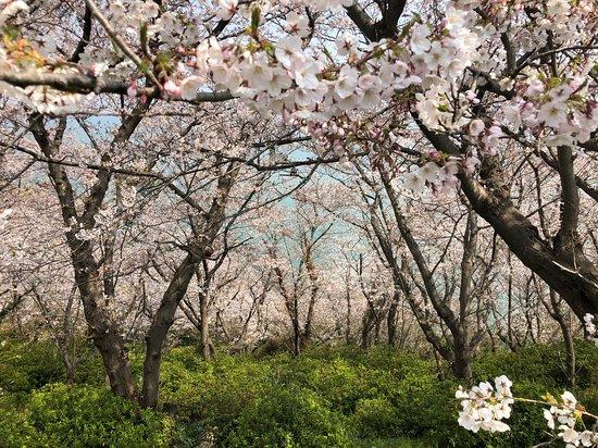 赤穂御崎公園