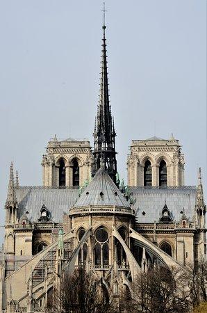 Fire At Cathedral Notre Dame De Paris Shark Attack