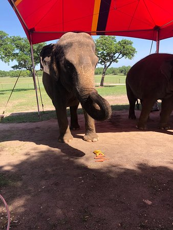 Hill Country Elephant Reserve