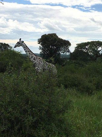 Национальный парк Руаха, Танзания: Ruaha
