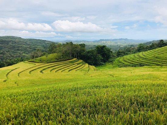 Candapdapan Rice Terraces