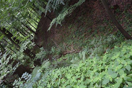 Rezerwat przyrody Zamczysko nad Raba