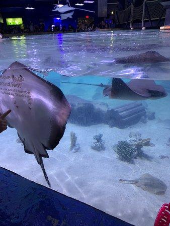 San Antonio Aquarium 2019 All You Need To Know Before
