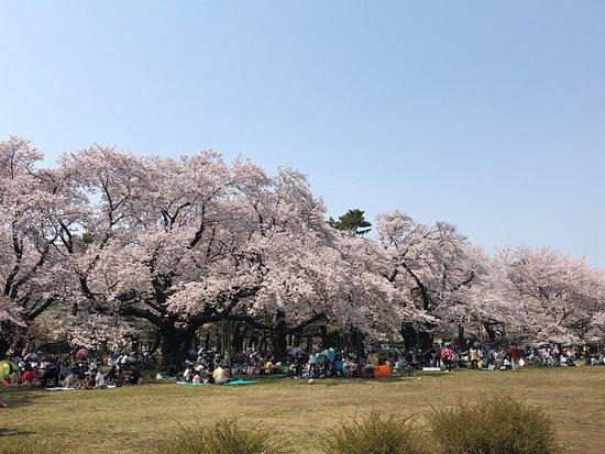 Tokyo Metropolitan Koganei Park