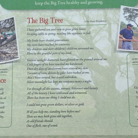 Poem About The Big Tree Picture Of Goose Island State Park