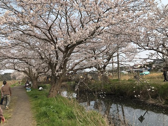 Imai no Sakura