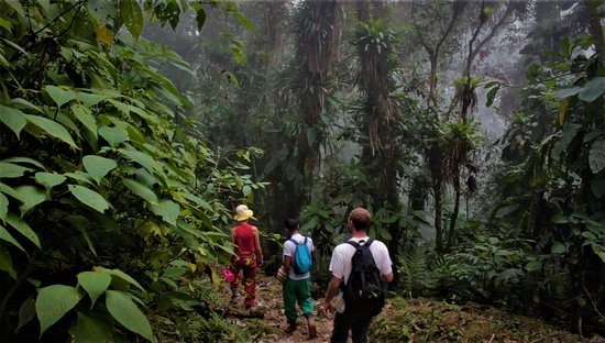 Taganga, Colombia: high mountain cloud forests live the magic of the forest