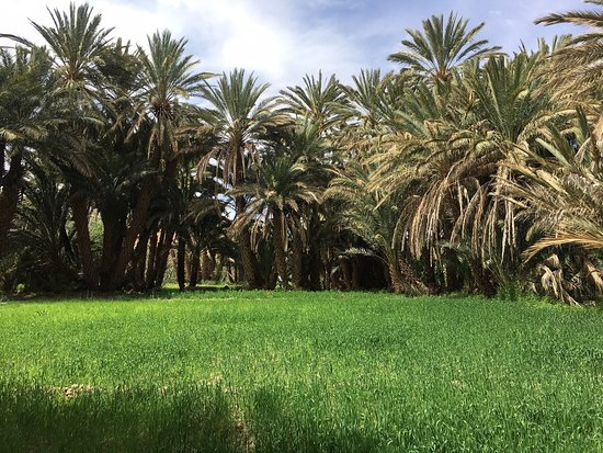Family business, many Berber cultures to experience