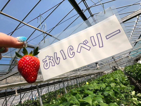 Yasuda Strawberry Farm